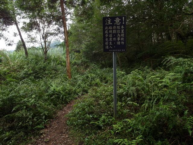 東眼山 (29).JPG