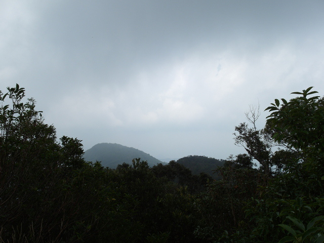 東眼山 (65).JPG