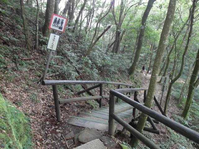 東眼山 (71).JPG
