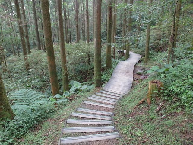 東眼山 (83).JPG