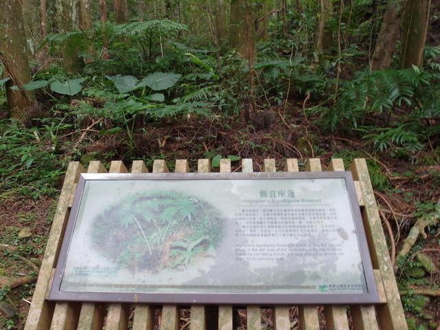 東眼山 (108).JPG