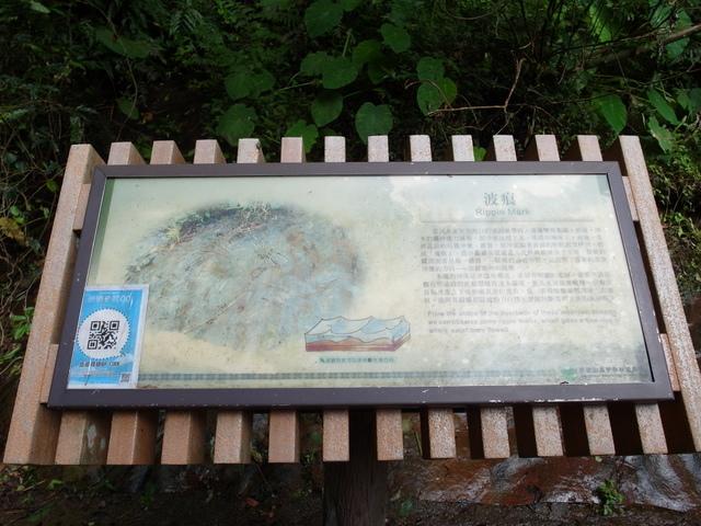 東眼山 (111).JPG