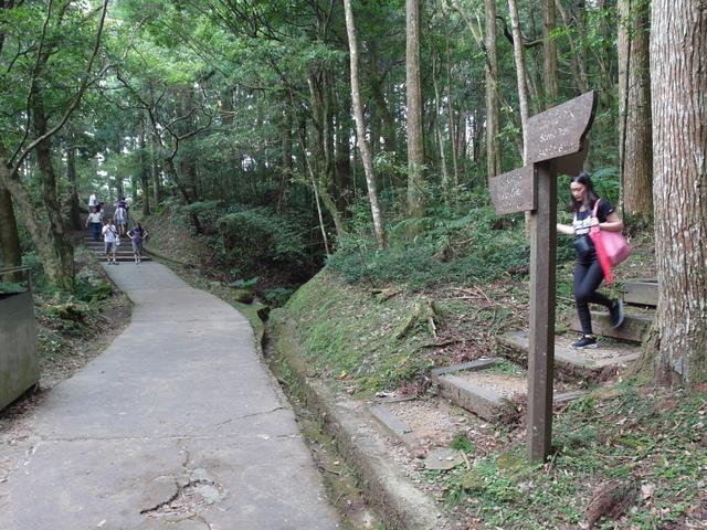 東眼山 (114).JPG