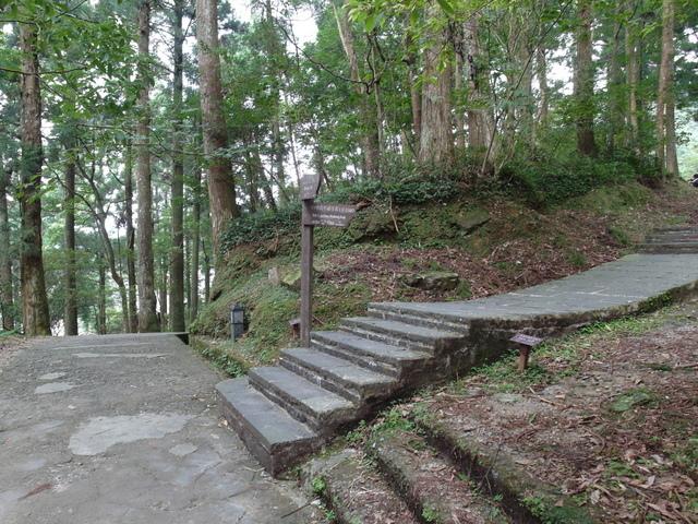 東眼山 (115).JPG