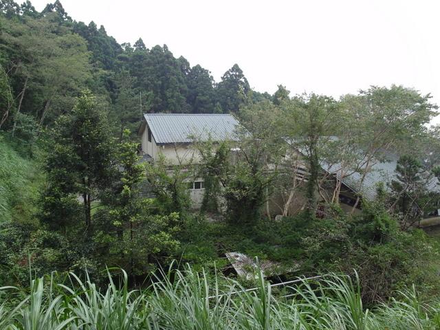 東眼山 (128).JPG