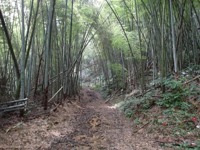 東眼山 (140).JPG