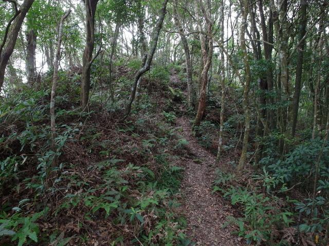 東眼山 (156).JPG