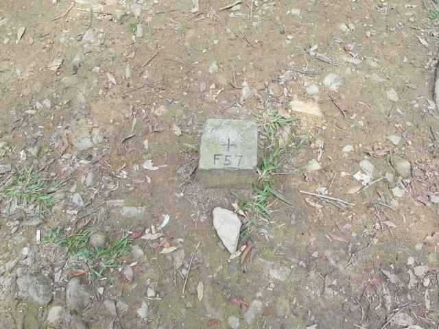 東眼山 (159).JPG