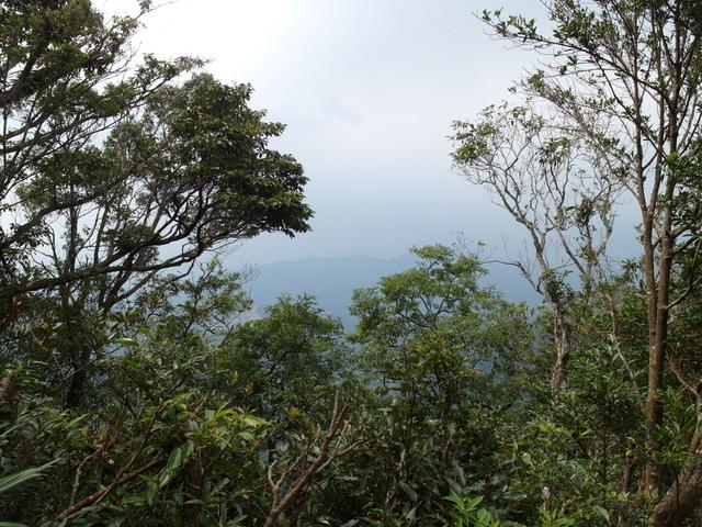 東眼山 (167).JPG
