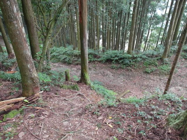 東眼山 (187).JPG