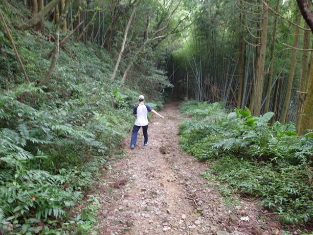 東眼山 (190).JPG