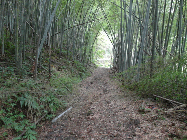 東眼山 (192).JPG