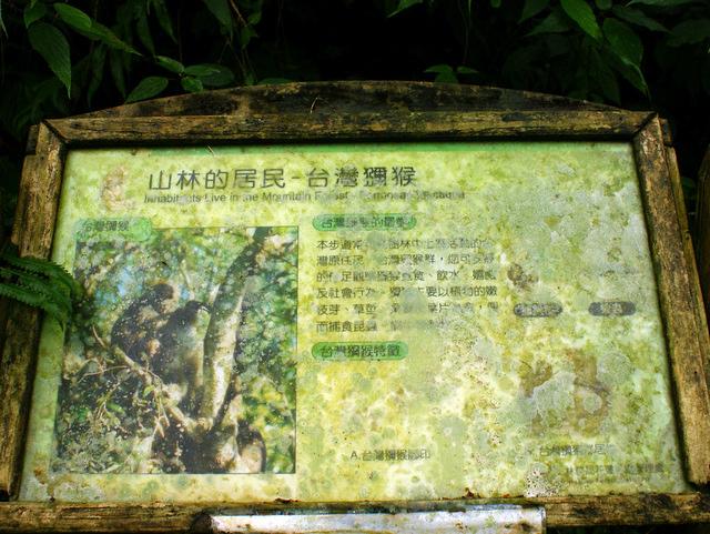 富源森林遊樂區 (144).JPG