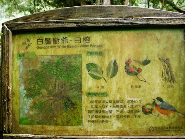 富源森林遊樂區 (146).JPG