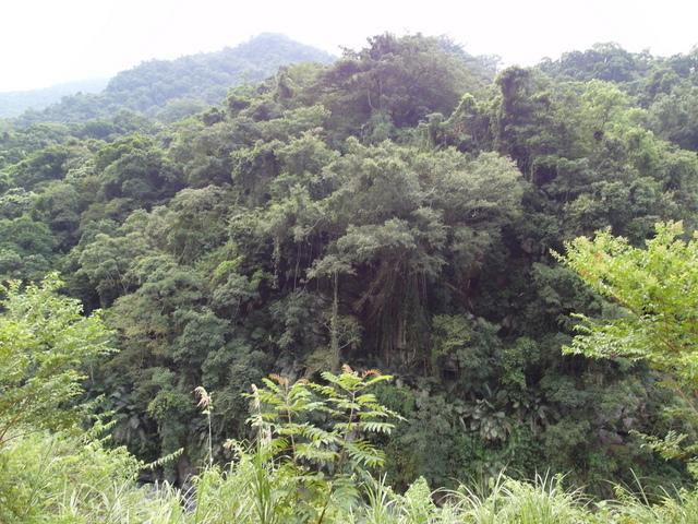 富源森林遊樂區 (175).JPG
