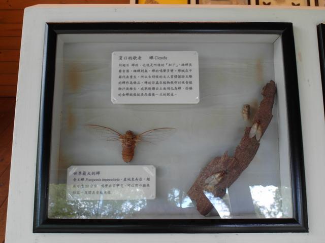 富源森林遊樂區 (196).JPG