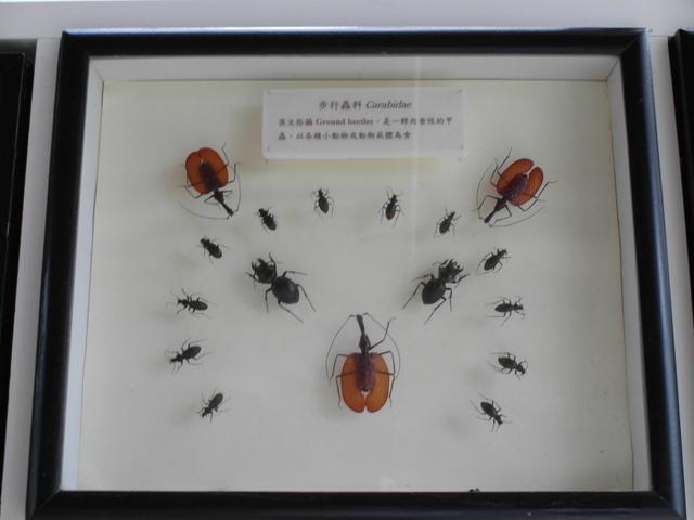 富源森林遊樂區 (200).JPG
