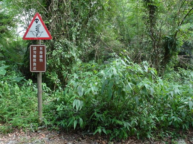富源森林遊樂區 (48).JPG