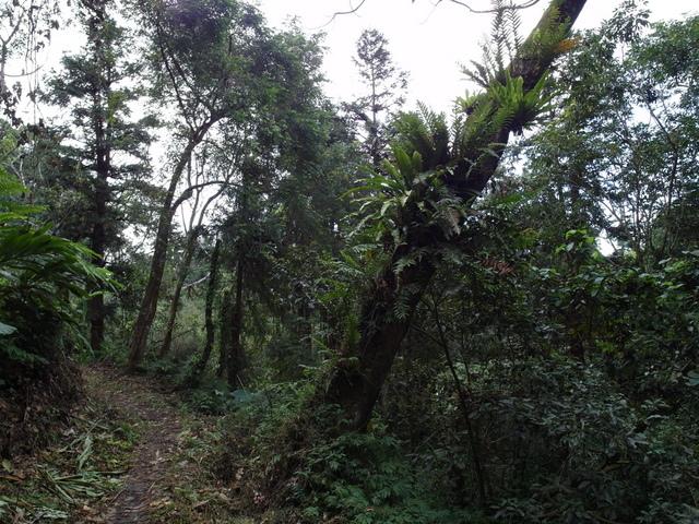 馬拉邦山 (144).JPG