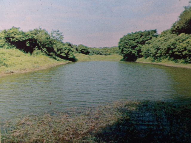 麟山鼻 (196).JPG
