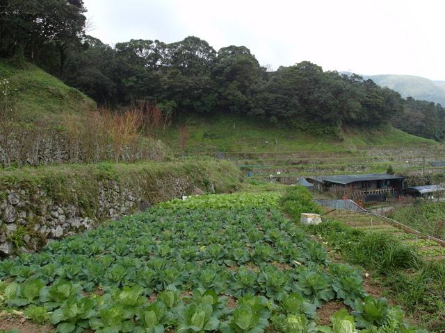 竹子湖  (16).JPG