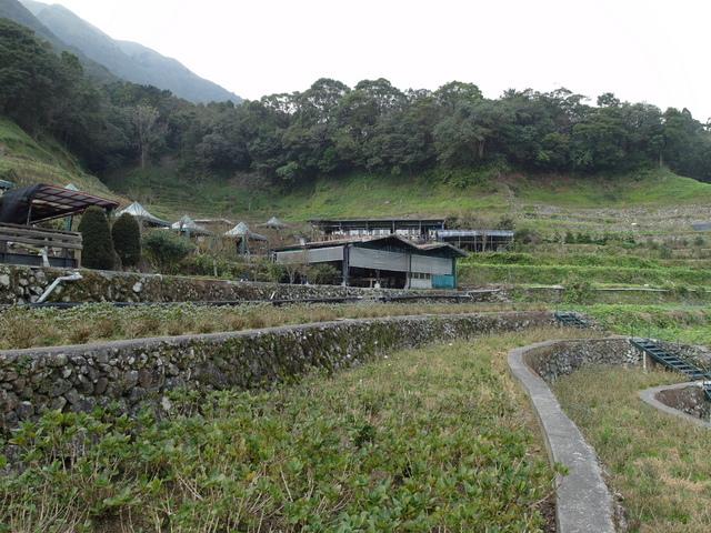 竹子湖  (18).JPG