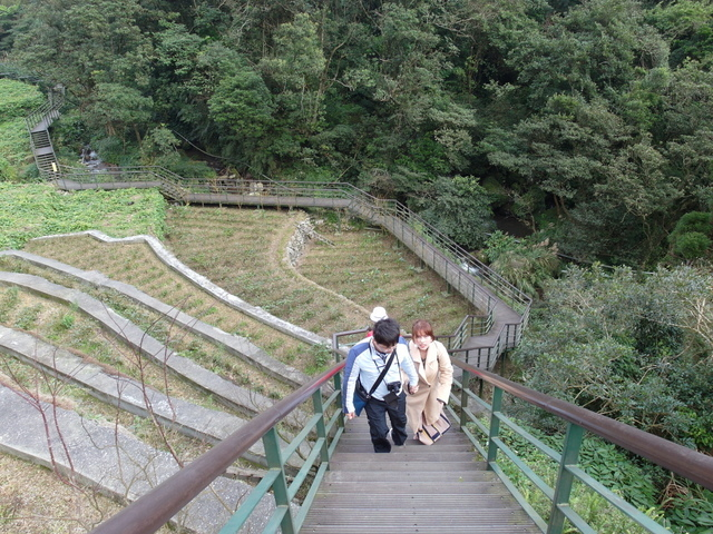 竹子湖  (19).JPG