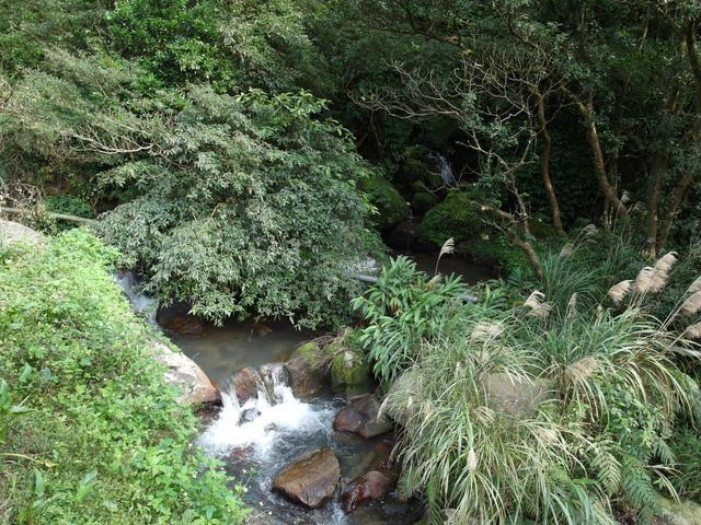 竹子湖  (20).JPG