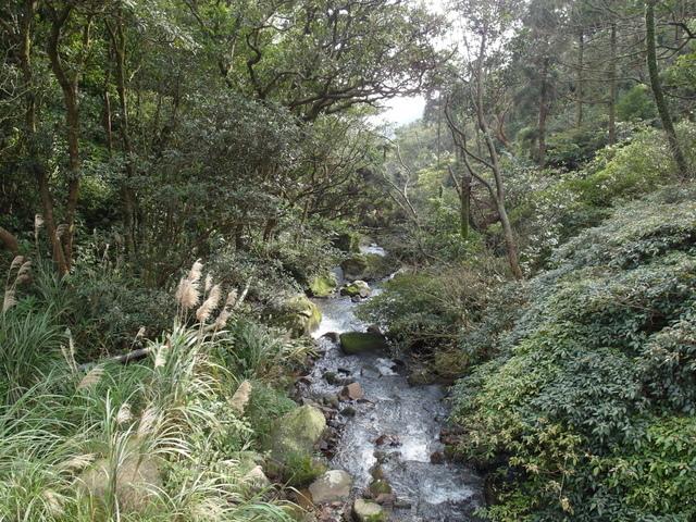 竹子湖  (22).JPG