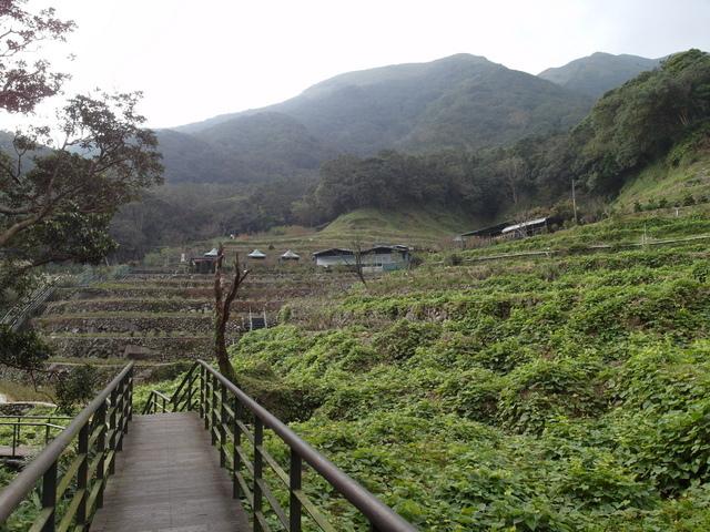 竹子湖  (24).JPG
