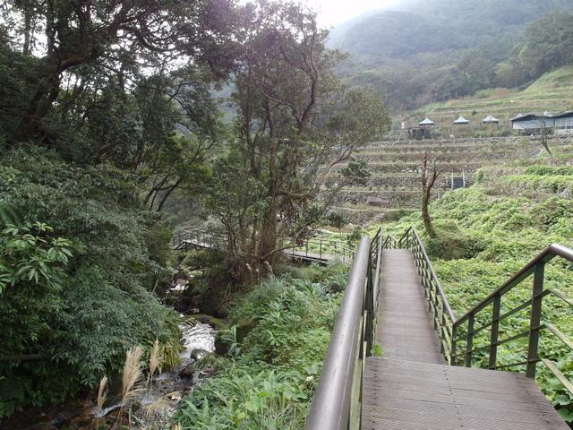 竹子湖  (25).JPG