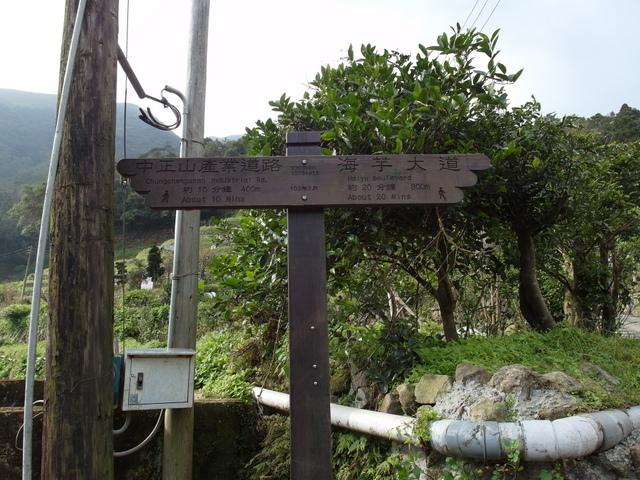 竹子湖  (28).JPG