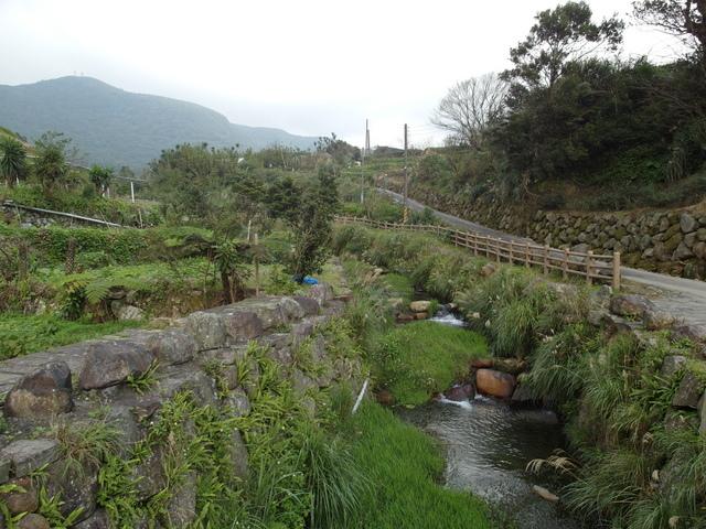 竹子湖  (31).JPG
