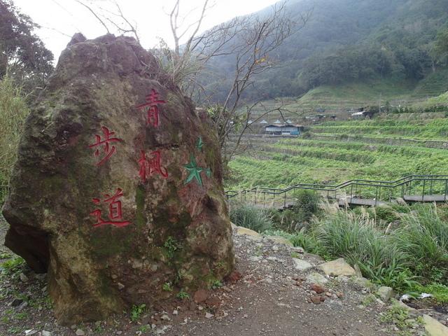 竹子湖  (32).JPG