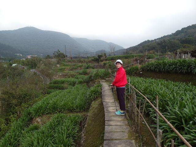 竹子湖  (36).JPG