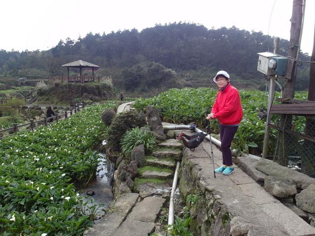 竹子湖  (40).JPG