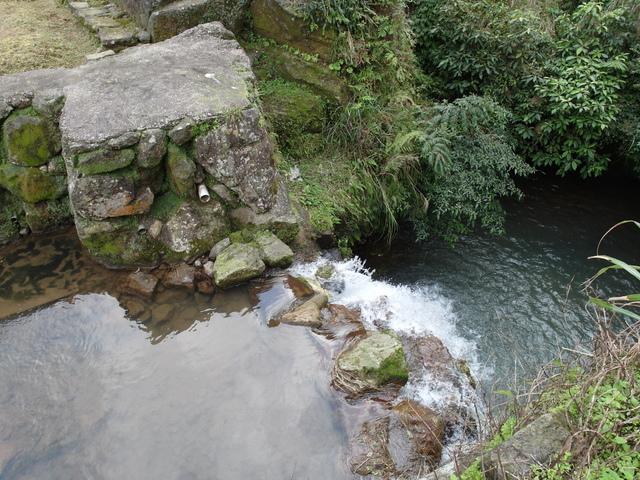 竹子湖  (44).JPG