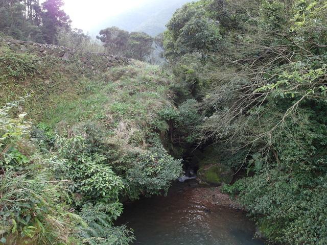 竹子湖  (51).JPG