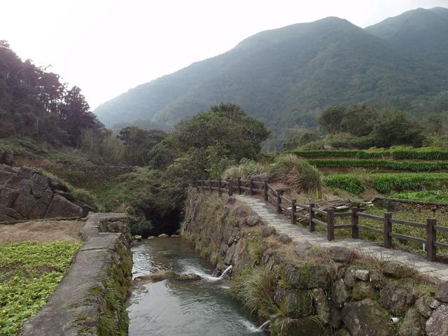 竹子湖  (52).JPG