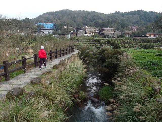 竹子湖  (53).JPG