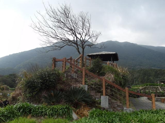 竹子湖  (54).JPG