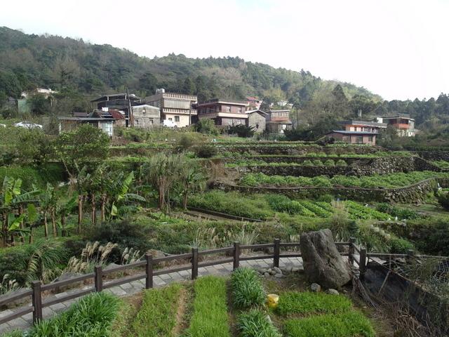 竹子湖  (55).JPG