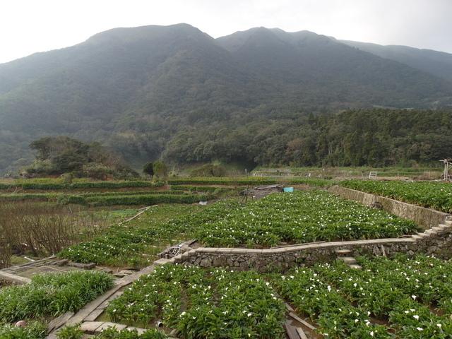竹子湖  (56).JPG