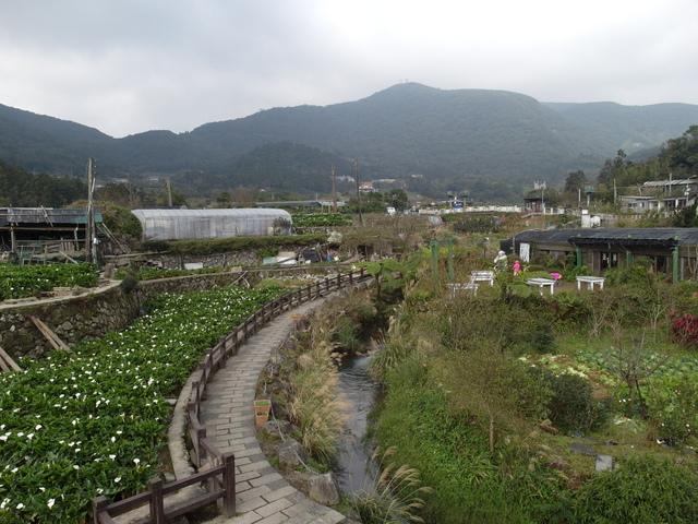 竹子湖  (57).JPG