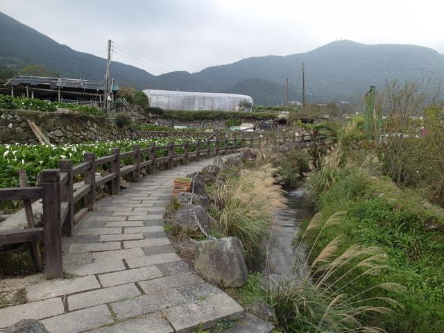 竹子湖  (60).JPG