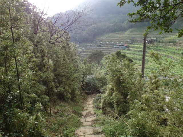 竹子湖  (63).JPG