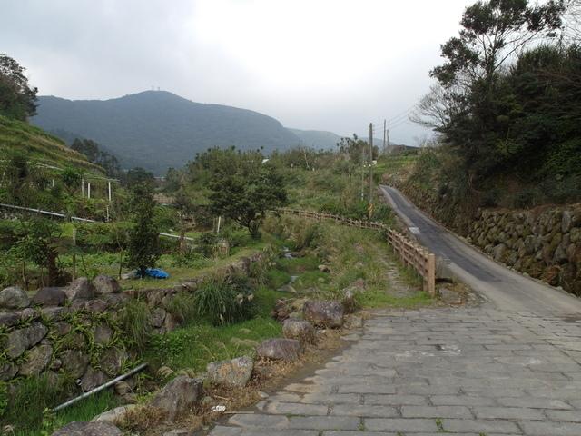 竹子湖  (65).JPG