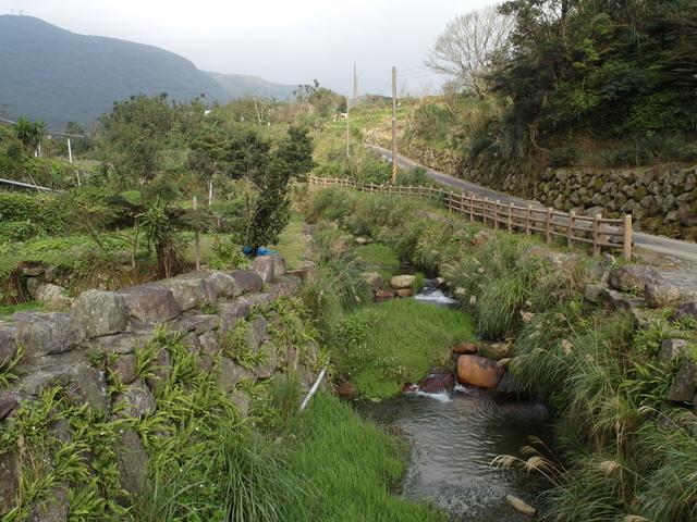 竹子湖  (66).JPG