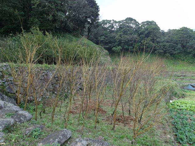 竹子湖  (82).JPG