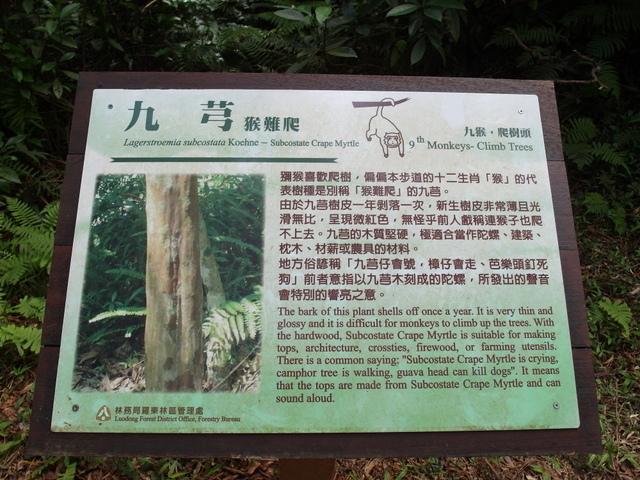 朝陽步道 (39).JPG